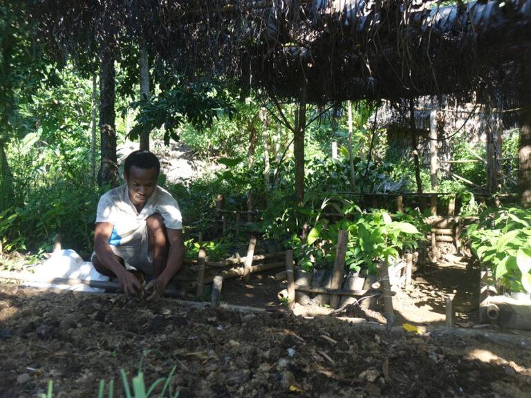 Read more about the article Formation en agroforesterie: la conduite de l'arbre