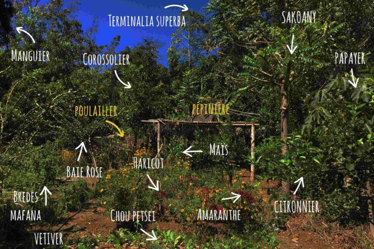 La pratique de l'agroforesterie sur le site d'Akiba