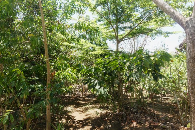 L'agroforesterie : qu'est-ce que c'est?