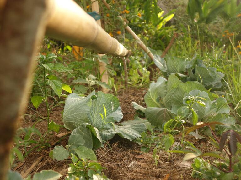 Formation: le potager agroécologique – Mise en place
