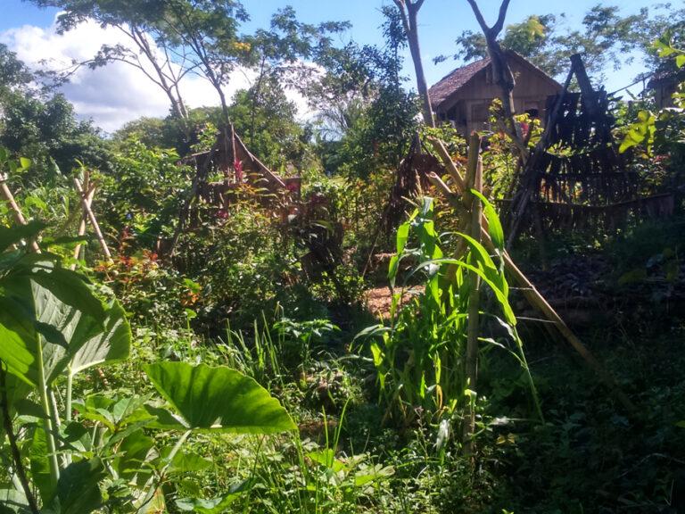 Formation: le potager agroécologique – Initiation