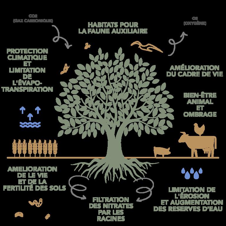 Shéma Agroforesterie